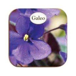 """Boite + Savon """"Violettes Sauvages"""""""